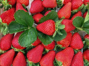 Flavia-fresas-checkin-fairs&markets
